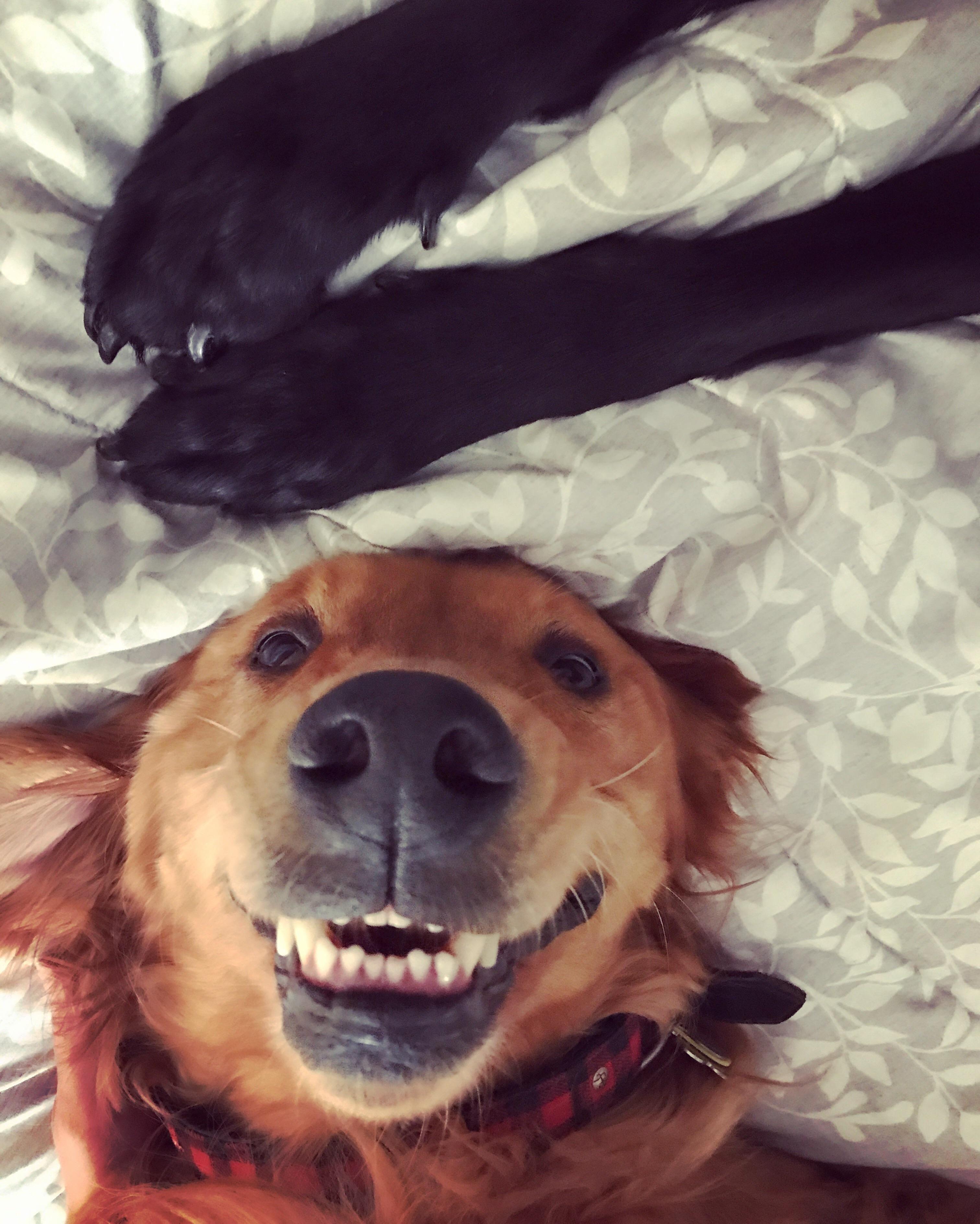 A little bit of derp this morning cute animals pinterest dog