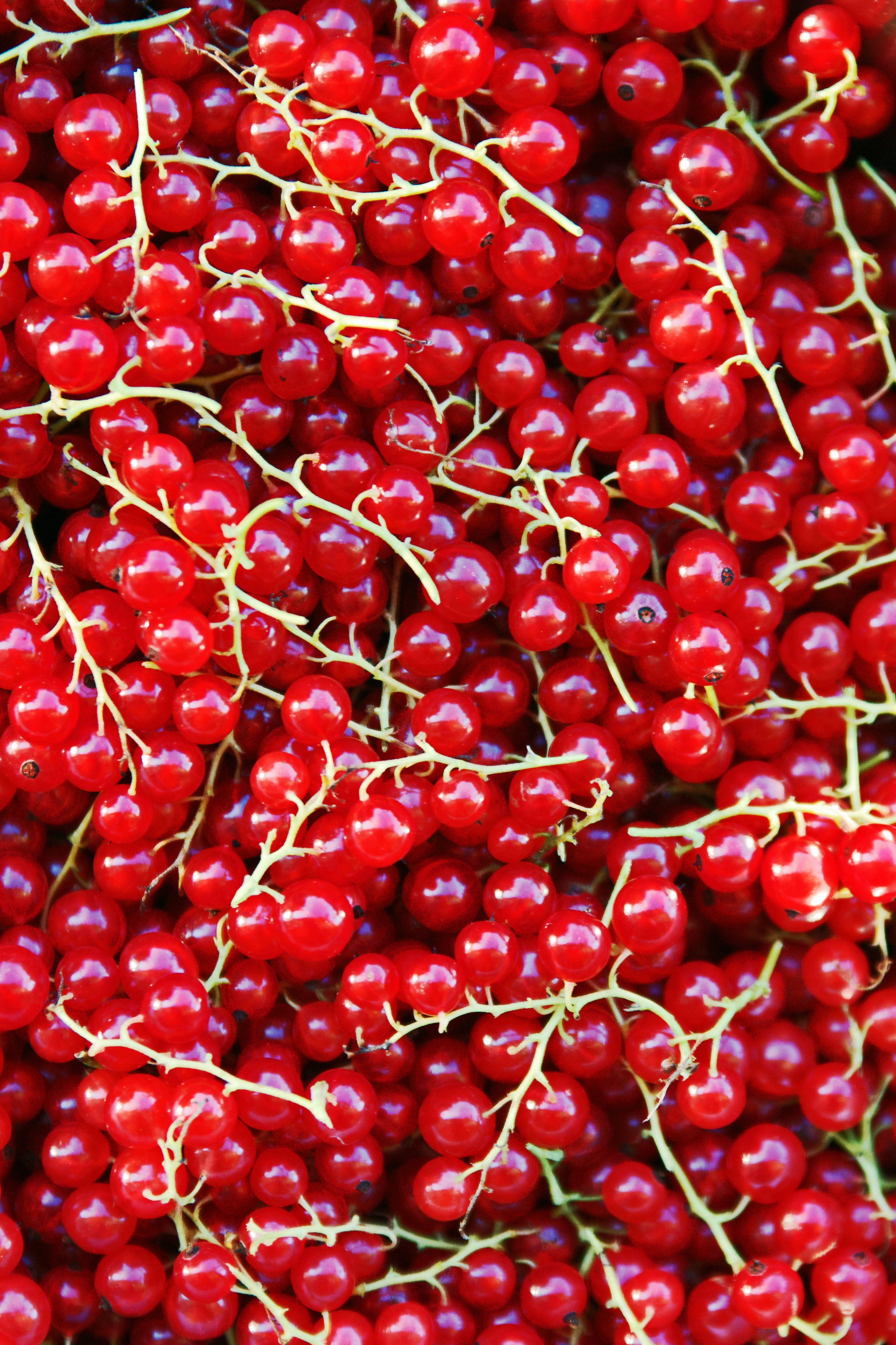 vad kan man göra av röda vinbär