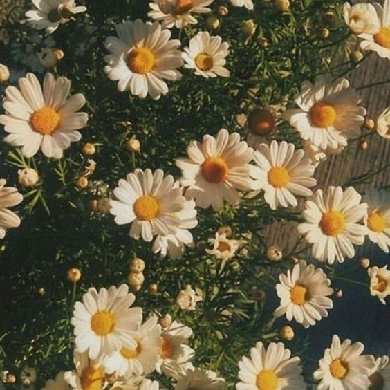 Image about summer in AESTHETIC ✔ by MICKEY on We Heart It