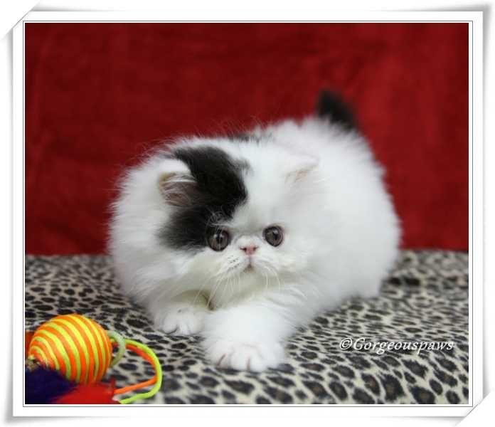 Pin On Gatos