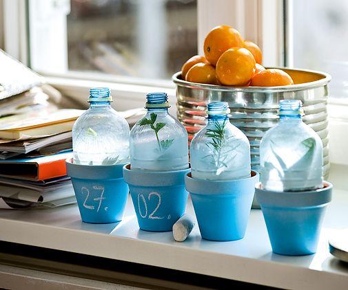 Gewächshaus Wohnung gewächshaus aus pet flaschen flaschen basteltipps und fotos