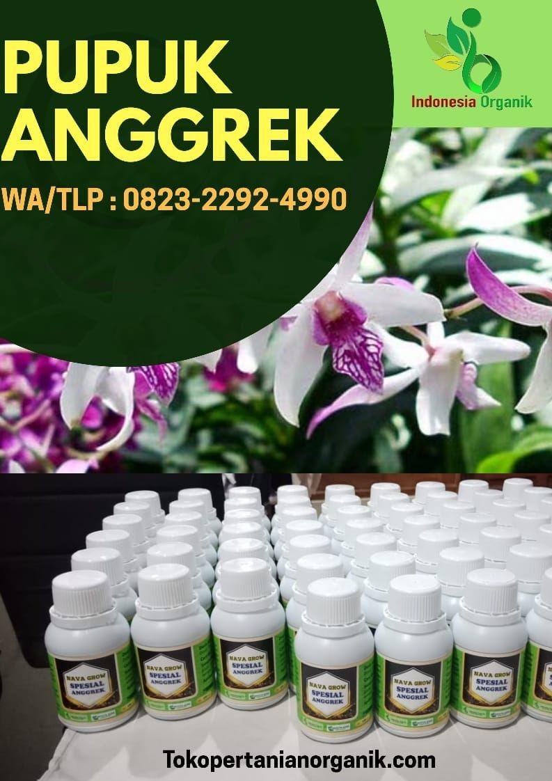 Amanah 0823 2292 4990 Jual Pupuk Anggrek Vanda Kirim Lampung