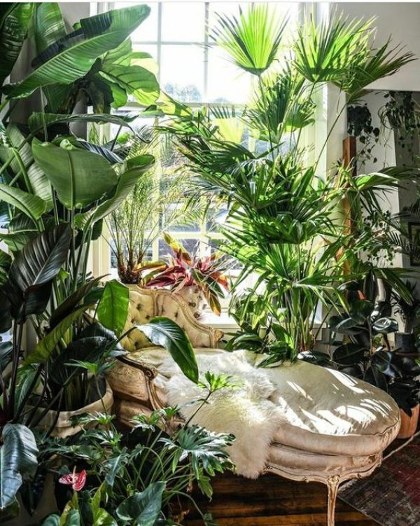 Decor with Plants-DIY Ideas -   16 cute planting Room ideas