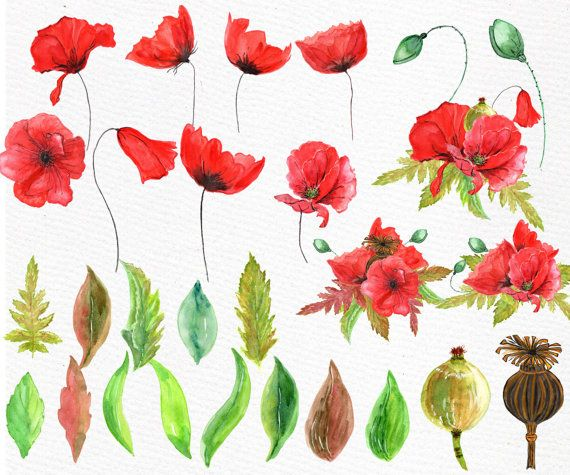 Watercolor poppies clipart poppies clip art floral clip art watercolor poppies clipart poppies clip art floral clip art watercolor clip art hand pinted clipart flower clipart wedding elements you will mightylinksfo