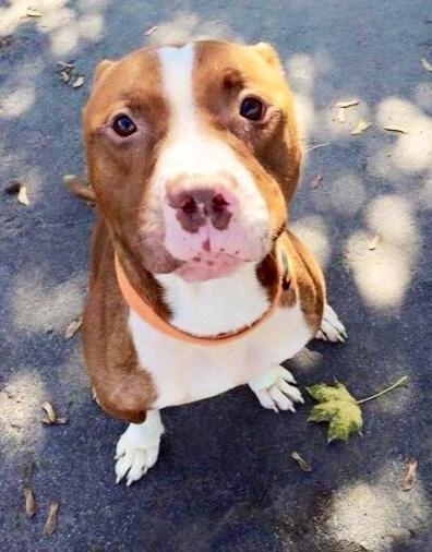 Adopt Bosco on Buffalo animal, Pets cats, Pitbull terrier