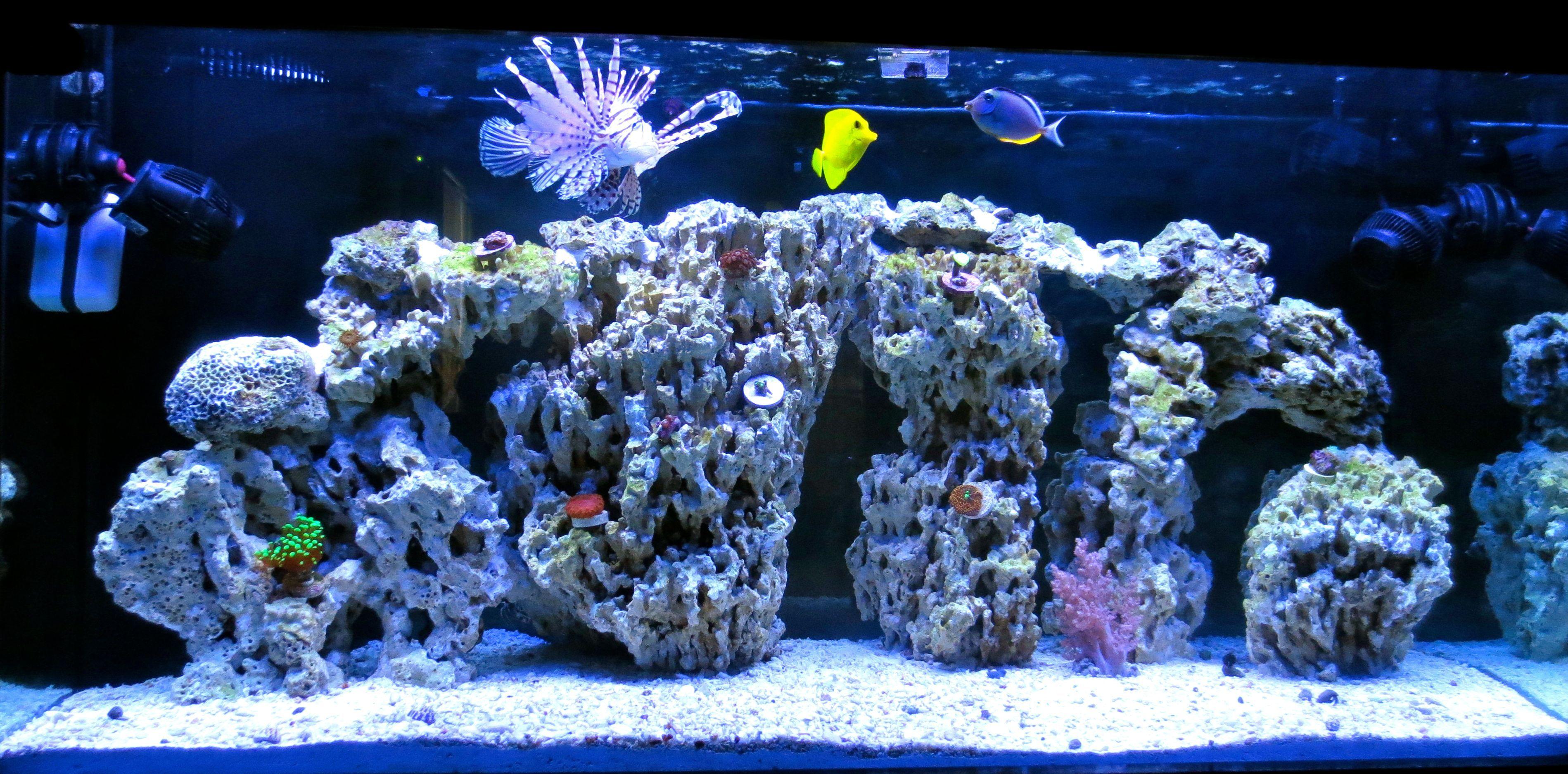 Display Tank With Pukani Rock Lion Fish Powder Blue Naso