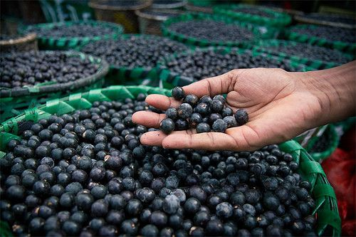"""So... What the hell is Acai? And why should I eat it? Pronounced """"ah-sah-ee"""", the berry bears its origins in the Amazon and comes from the Acai palm tree."""