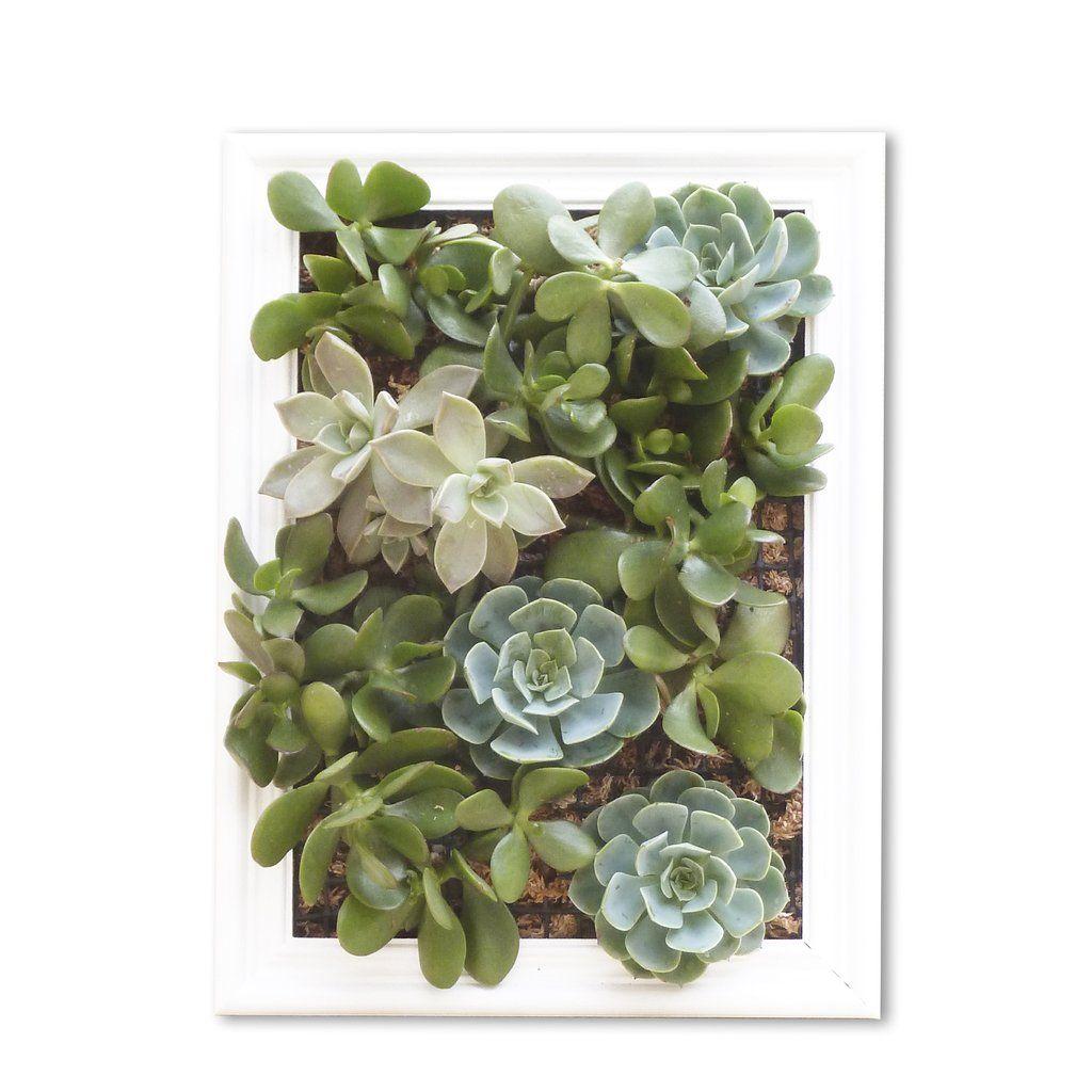 Cuadro vivo con plantas suculentas de la tienda el hecho for Cuadro jardin vertical