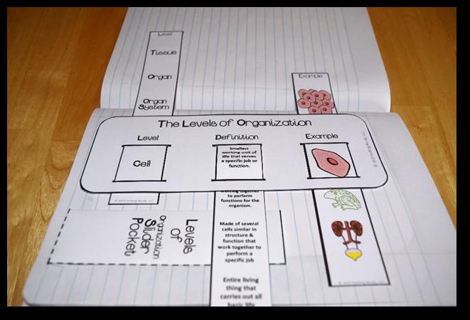 Levels Of Organization Slider Activity For Interactive Science Notebooks Interactive Science Notebook Interactive Notebooks Biology Classroom