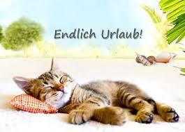 Bildergebnis Fur Endlich Urlaub Wochenende Cats Good Night Und