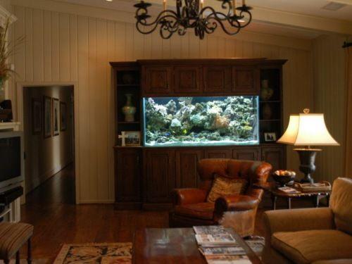 Para quienes les gustaría tener un acuario en casa, en esta galería