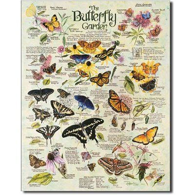$9.06 R. Lee Butterfly Garden Plants Insects Retro Vintage Tin Sign  From Poster Revolution   Get it here: http://astore.amazon.com/ffiilliipp-20/detail/B00149XU9Y/178-3643210-8507349
