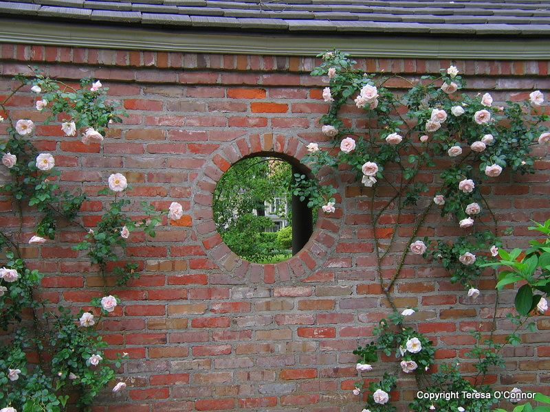 Climbing Roses On A Brick Wall Secret Garden Climbing