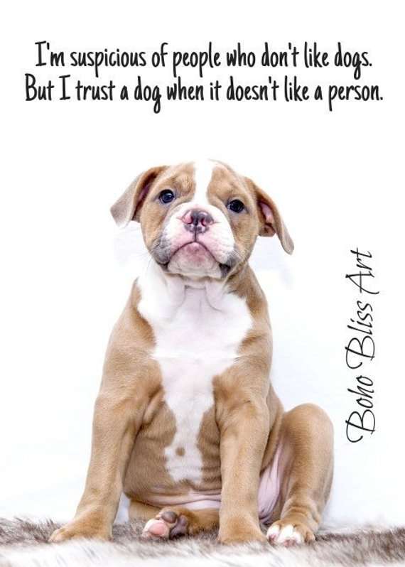 I M Suspicious Of People Who Don T Like Dogs But I Trust A Dog