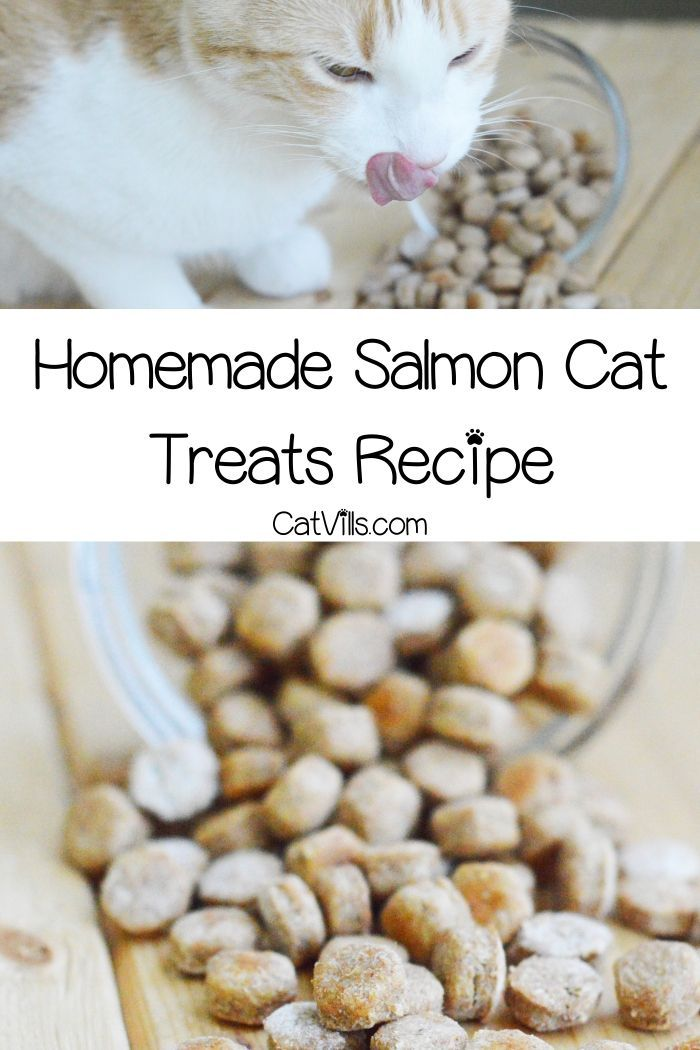 Homemade Salmon Cat Treats Recipe Catvills Cat Treat Recipes Homemade Cat Food Cat Treats Homemade