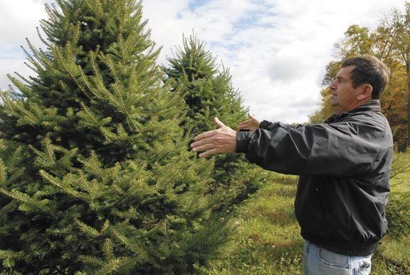 Bob S Trees Christmas Tree Farm In Galway Geared Up For Busy Season Christmas Tree Farm Tree Farms Christmas Tree