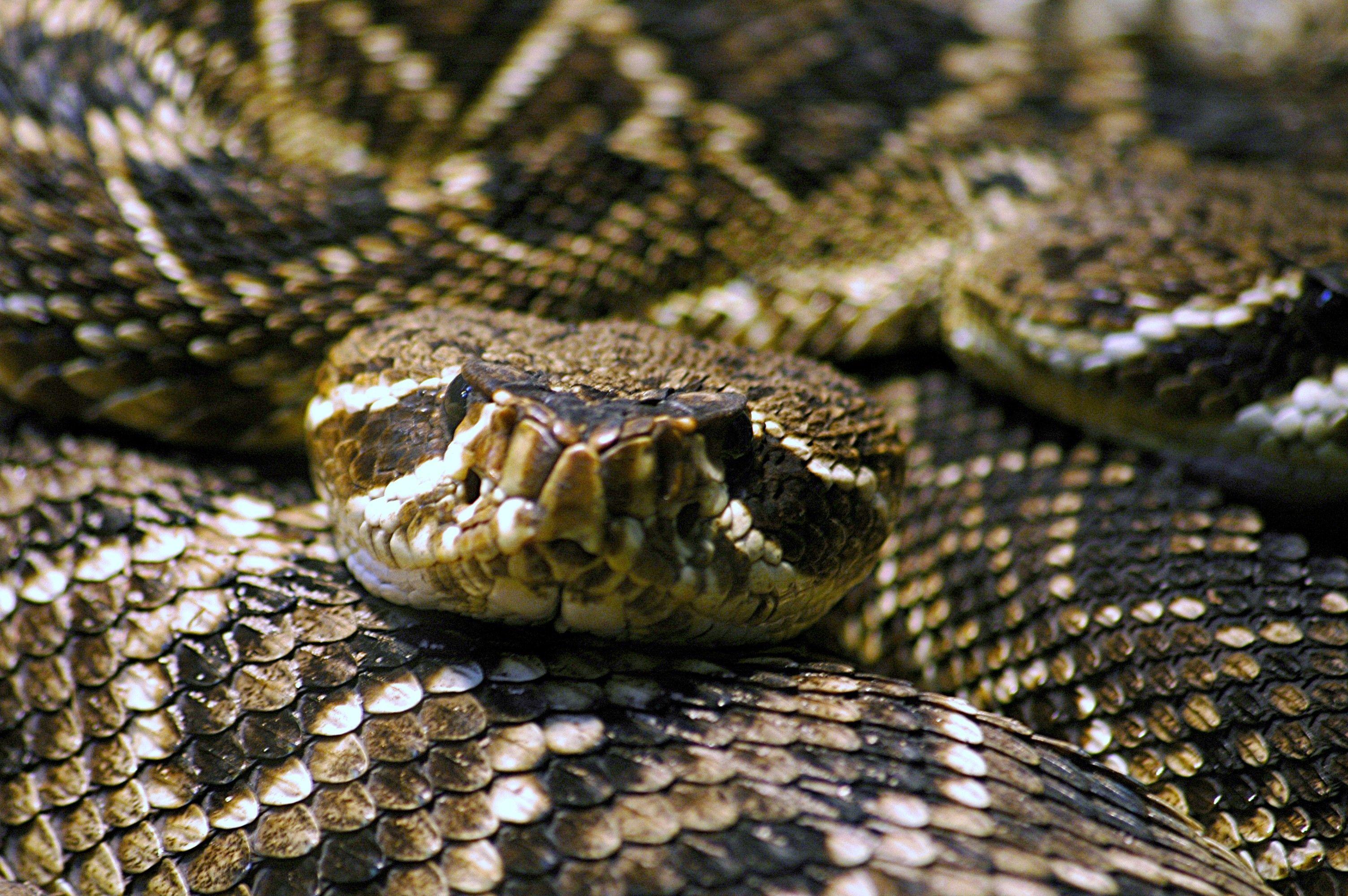 rattlesnake proof a backyard backyard gardens and yards