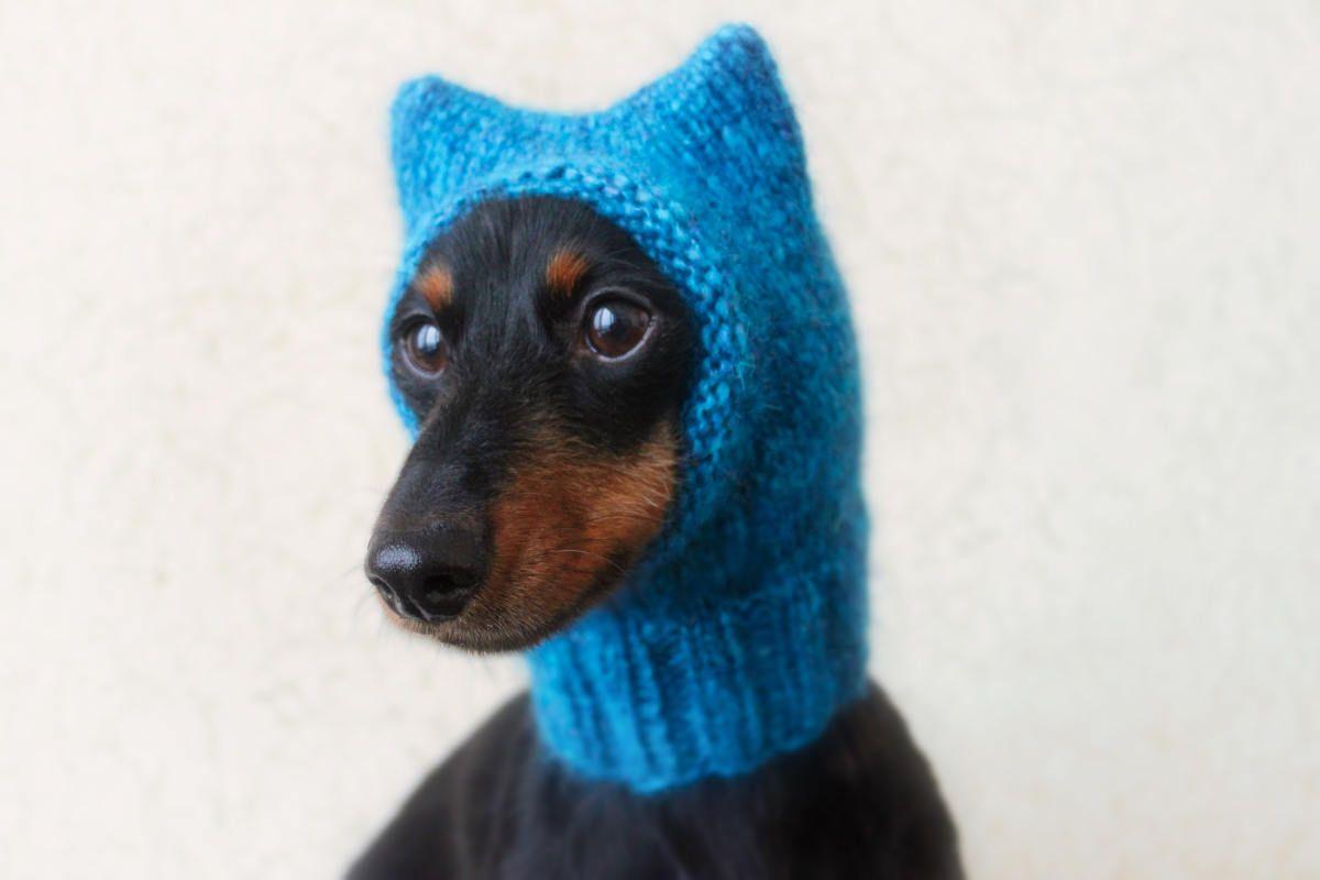 KNITTING PATTERN, Small Dog Hat, Pussycat Hat, Kitty Cat