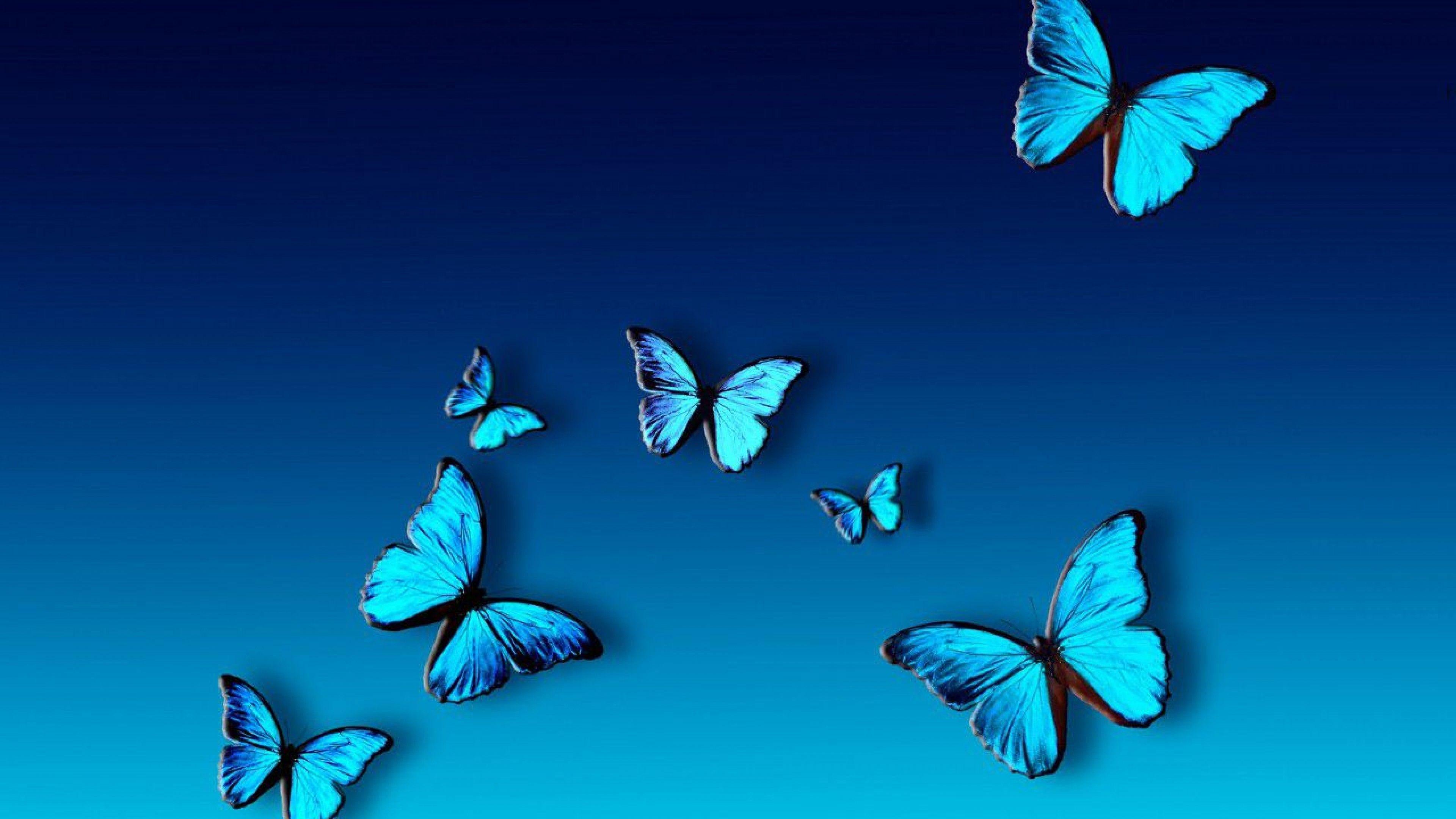 3840x2160 Ultra Hd 5k Resolutions Blue Butterfly Wallpaper Blue Butterfly Butterfly Wallpaper
