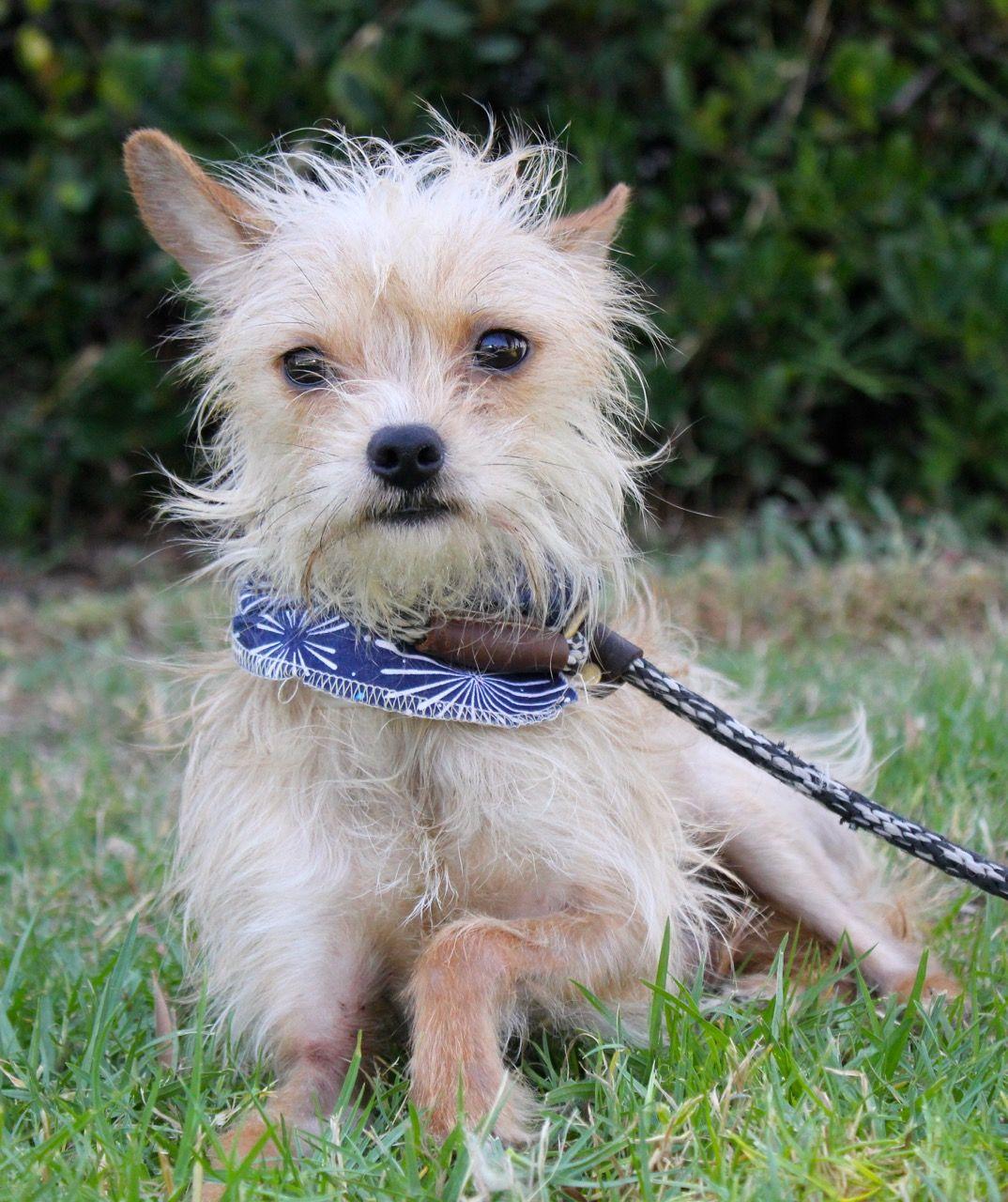 Toxirn Dog For Adoption In El Cajon Ca Adn 605611 On Puppyfinder