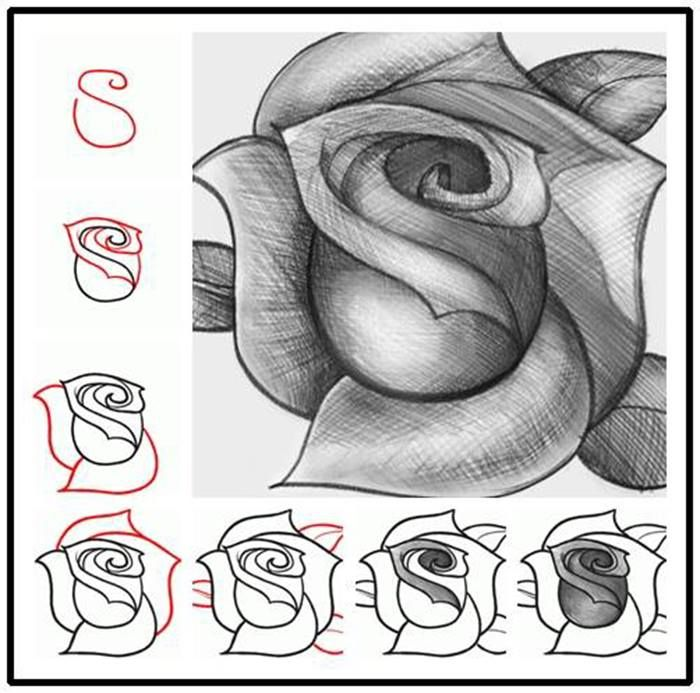 now i ll always know how to draw the perfect rose 3 creativity