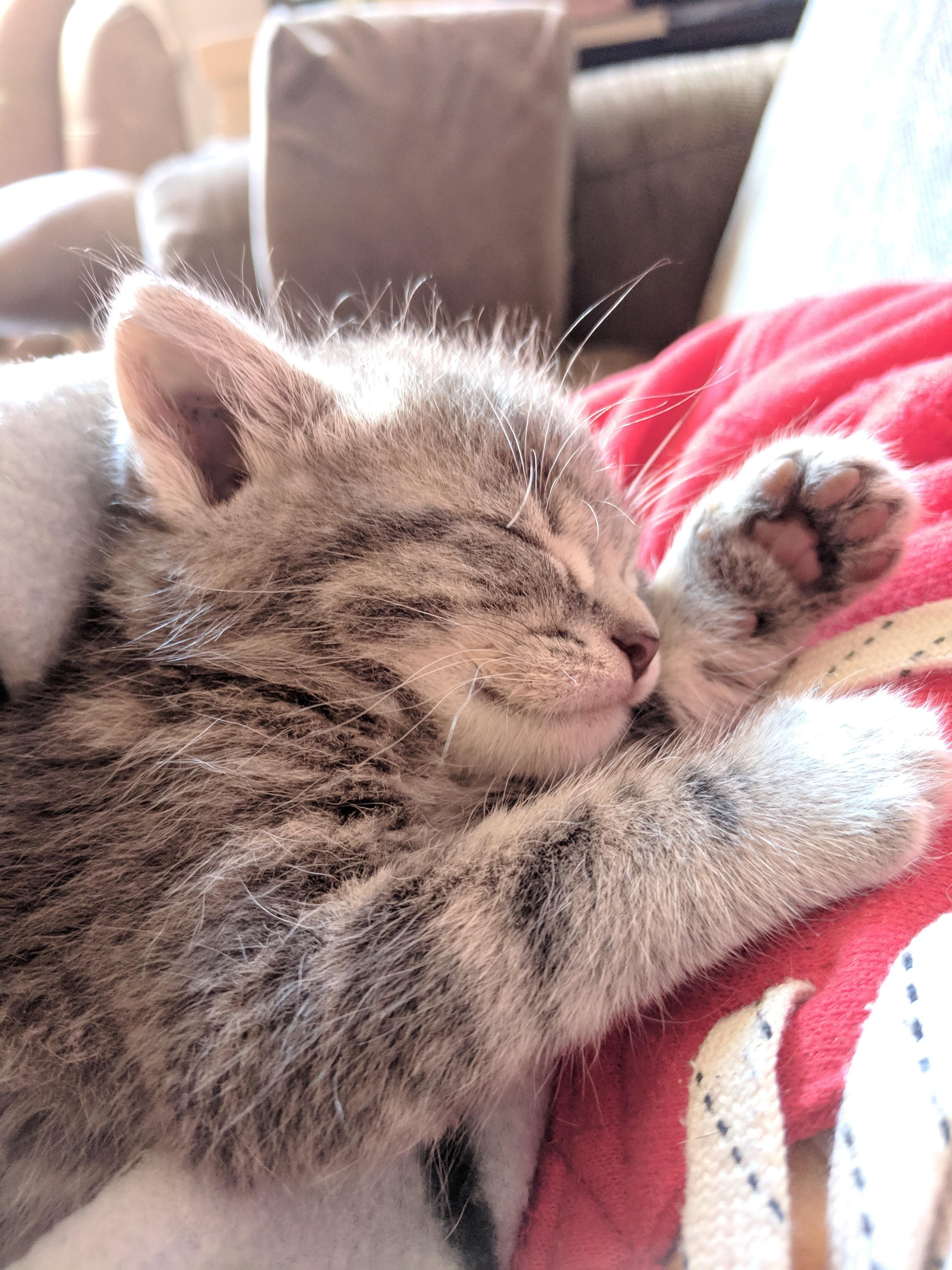фото спящие котята них есть элементы