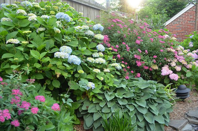 One Story Building Website Login Hydrangea Landscaping Landscaping On A Hill Planting Hydrangeas