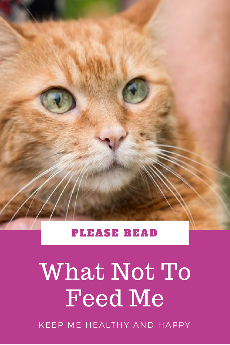 As Much As You Might Love Chocolate Don T Give It To Your Kitty Read More About What Not To Feed Your Cat Cat Behavior Cats Cat With Blue Eyes