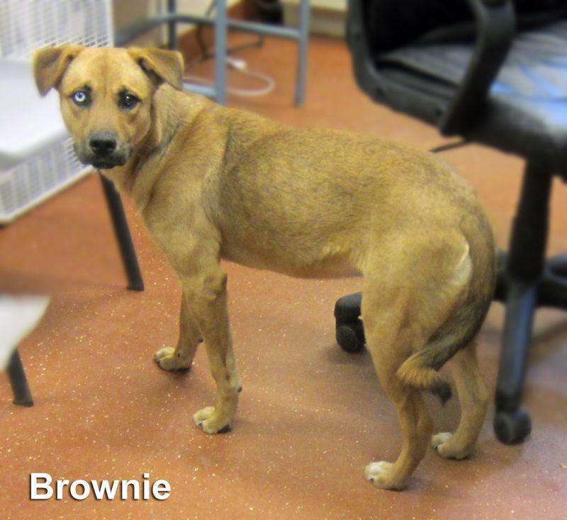 Adopt Brownie Yrly 466 On Dog Cat Dogs Pet Adoption