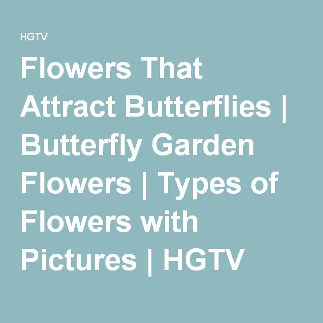 Flowers That Attract Butterflies | Butterfly Garden Flowers | Types of Flowers with Pictures | HGTV