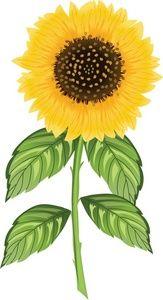 Sunflower Clipart Image: Realistic Sunflower Illustration ...