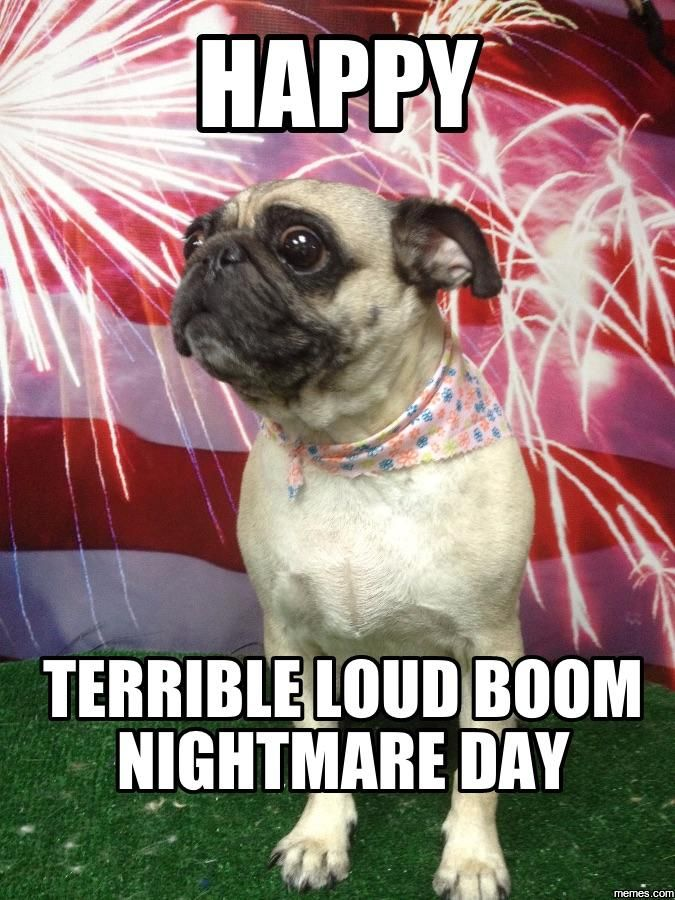 On This Special Day Remember Our Puppy Pals Funny Memes About Life Funny Animals Funny Memes