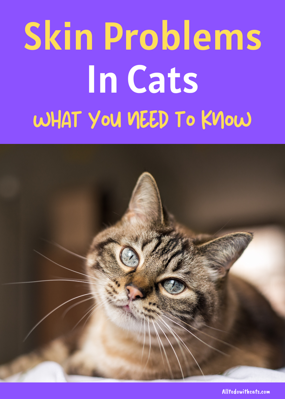 Kidney Diseases In Cats Everything You Should Know Symptoms And Herbal Support For Your Cat With Kidney Disease Cat Care Cat Kidney Cat Diseases