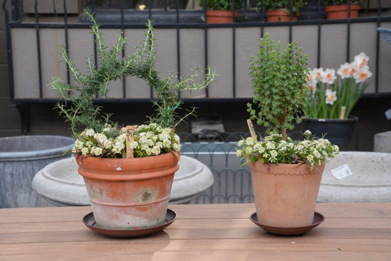 small spring containers