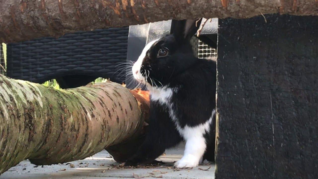 Pin On Bunny Rabbit