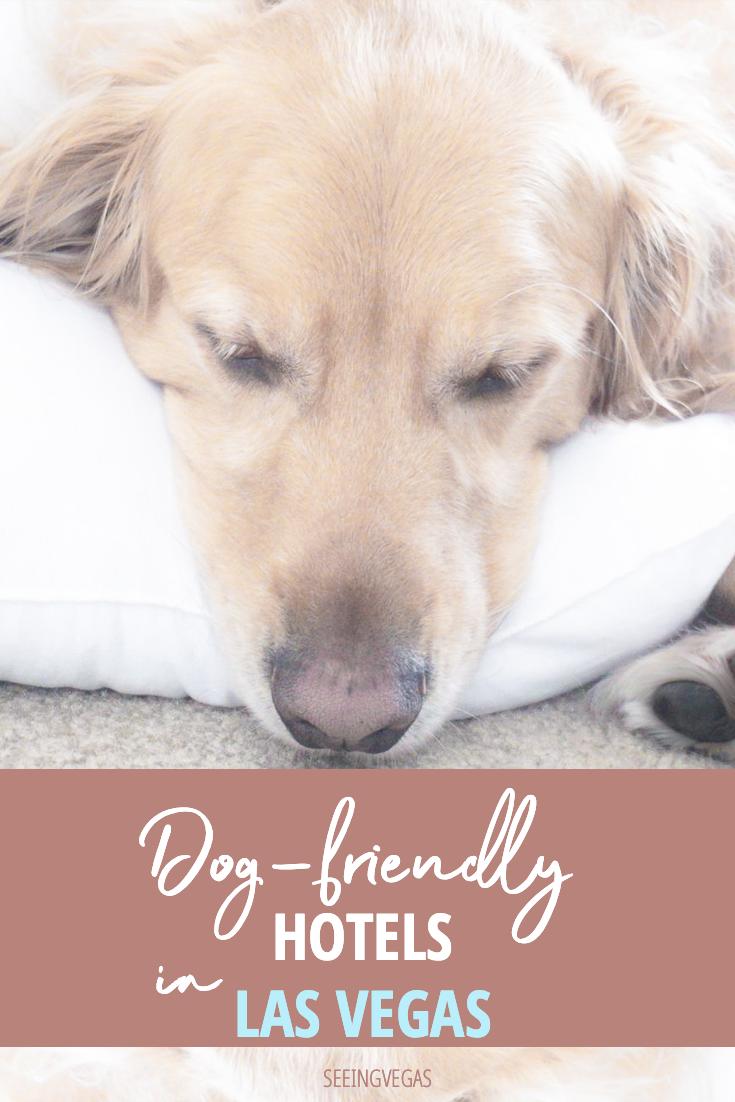 Pet Friendly Hotels In Las Vegas To Pamper Your Best Friend Las Vegas Hotels Dog Friendly Hotels Pet Friendly Hotels