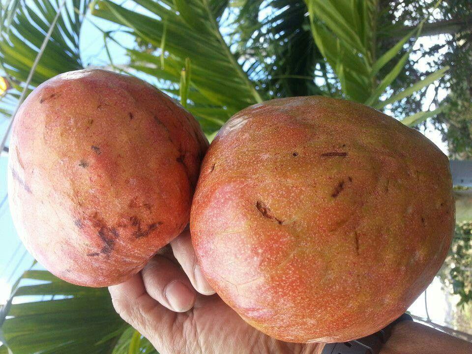Corazon Fruit Puerto Rico Fruit Veggies Pinterest Puerto