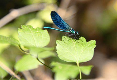 Tuscan Dragonfly  www.capturinglavita.com
