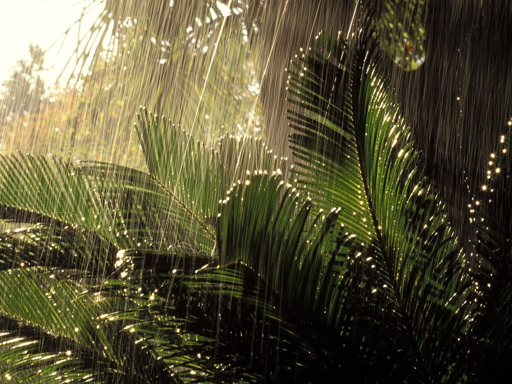 Rain In Jungle Rain Wallpapers Rainy Wallpaper Nature Wallpaper
