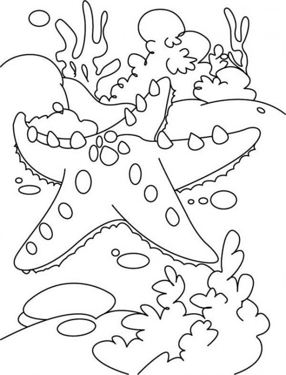 A Big Starfish And The Coral Reef Coloring Page To Print For Kids ...