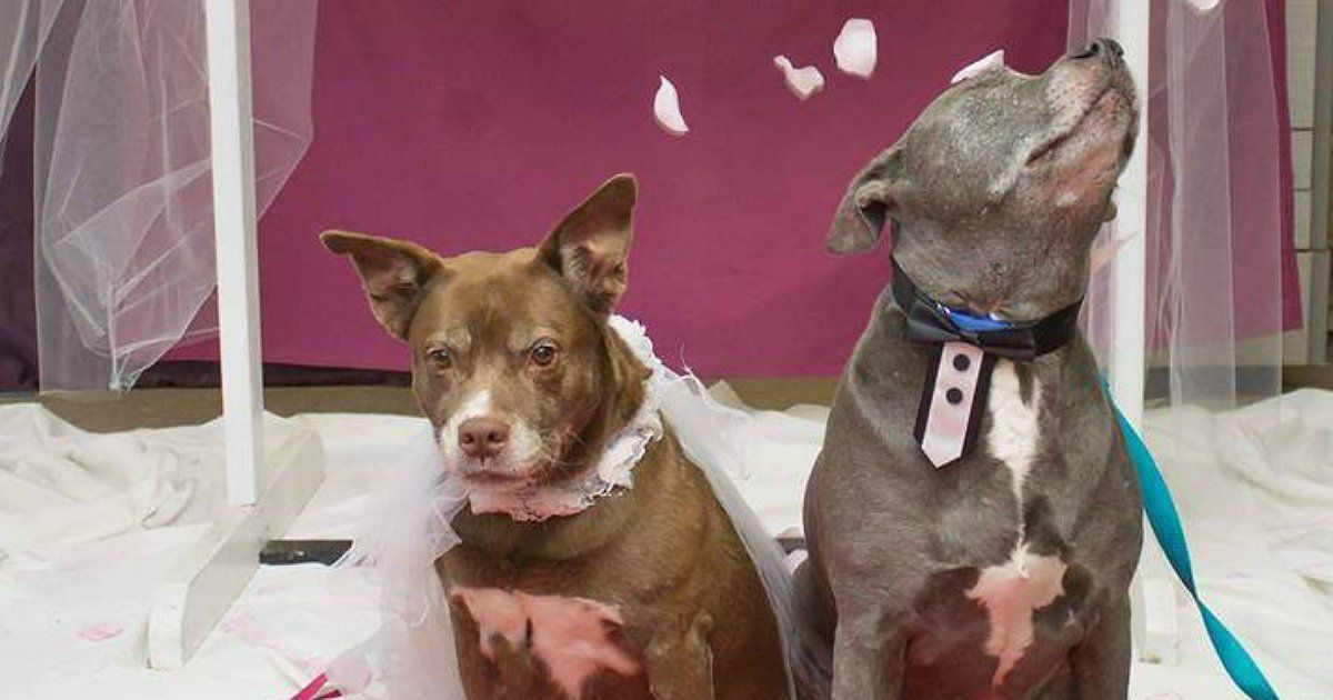 Senior Dogs Get Married In Animal Shelter To Help Them Be Adopted Together Senior Dog Animal Shelter Adoption