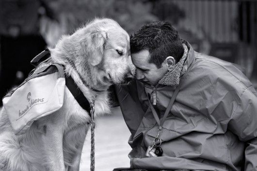 Service Dog And Man I Love Dogs Cute Dogs Cute Dog Pictures