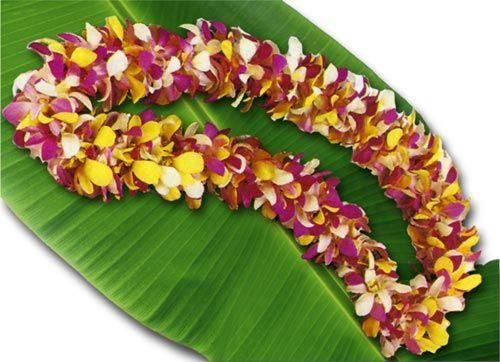 Hawaiian Leis graduations, birthdays, thanksgiving, christmas, Must
