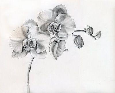 Orchid Flower Tattoos On Pinterest Tattoo