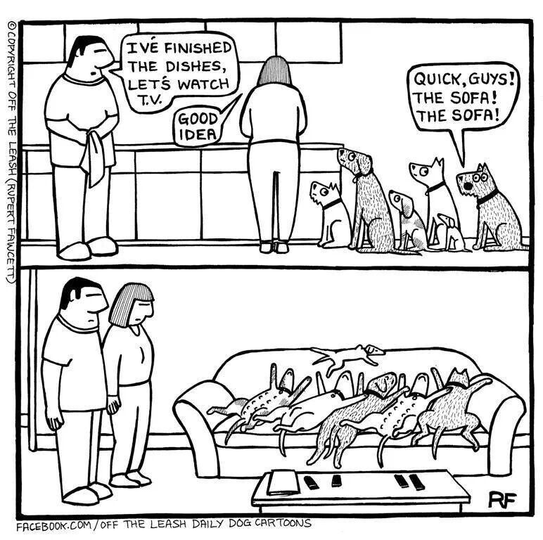 This is my house..... Dog comics, Cartoon dog, Dog parents