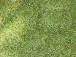 Free Stock Photo Of Grass Texture Grass Photoshop Plant Texture