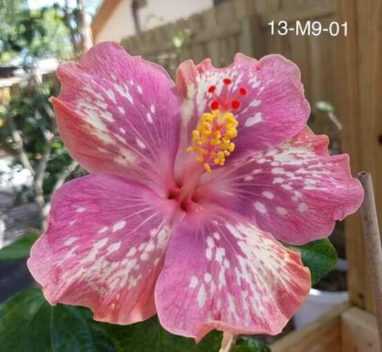 Pin By Rohani On Bunga Raya