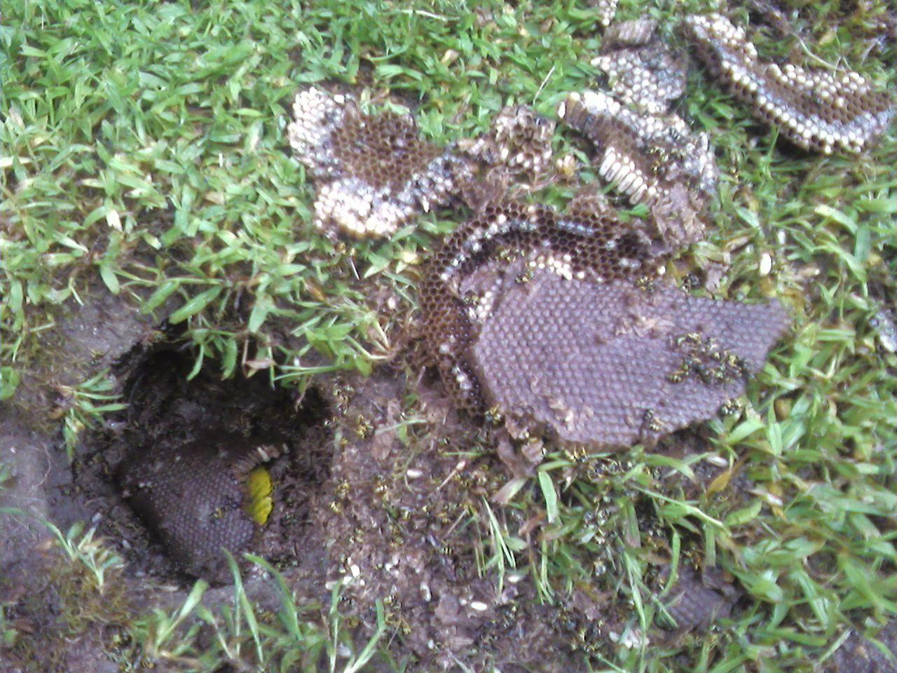 Kill yellow jackets in the ground - Kill Yellow Jackets In The Ground 7