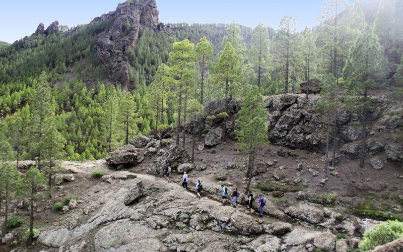 Lähde Gran Canarian pinjojen verhoamille vuorenrinteille ja nauti upeista luonnonmaisemista täysin siemauksin. www.apollomatkat.fi #Vaellusretki
