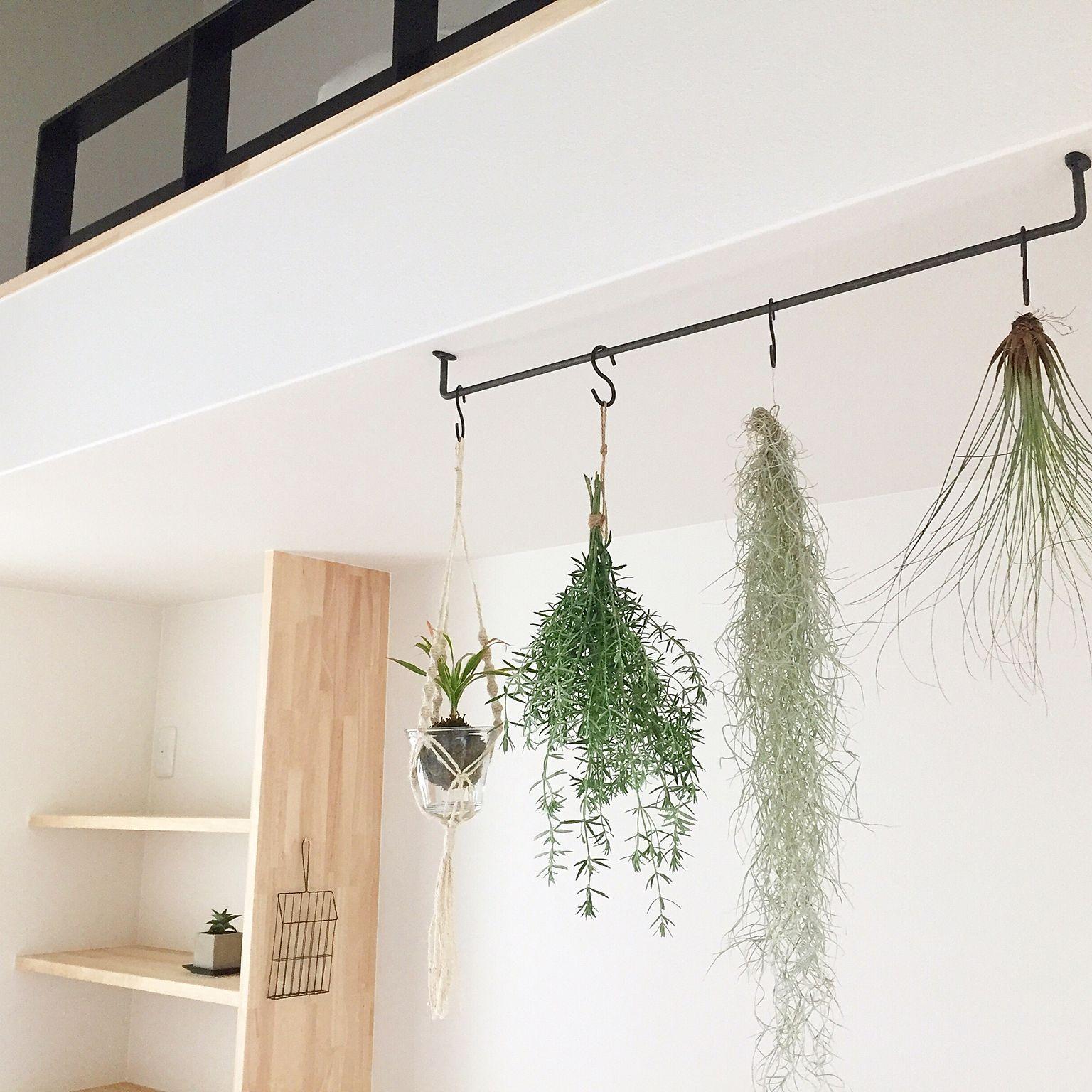 壁 天井 観葉植物 無垢材 ナチュラル 自然光 などのインテリア実例